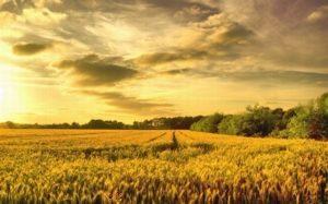Выделение земельных паев - порядок выделения