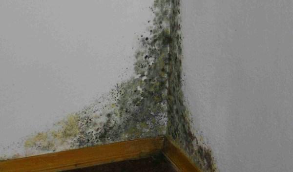 Мокнут стены в квартире: что делать?